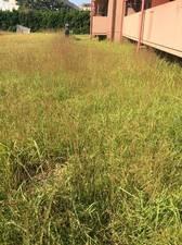愛知県名古屋市名東区の『マンション共用部 草刈作業』
